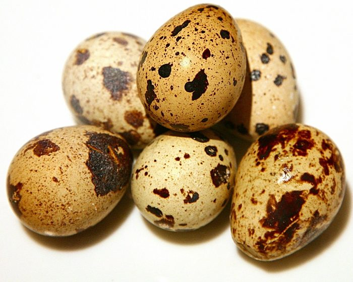 калорийность перепелиный яиц