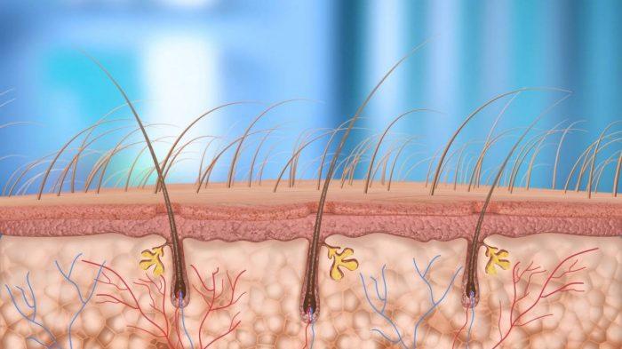 волосы человека растут от корней