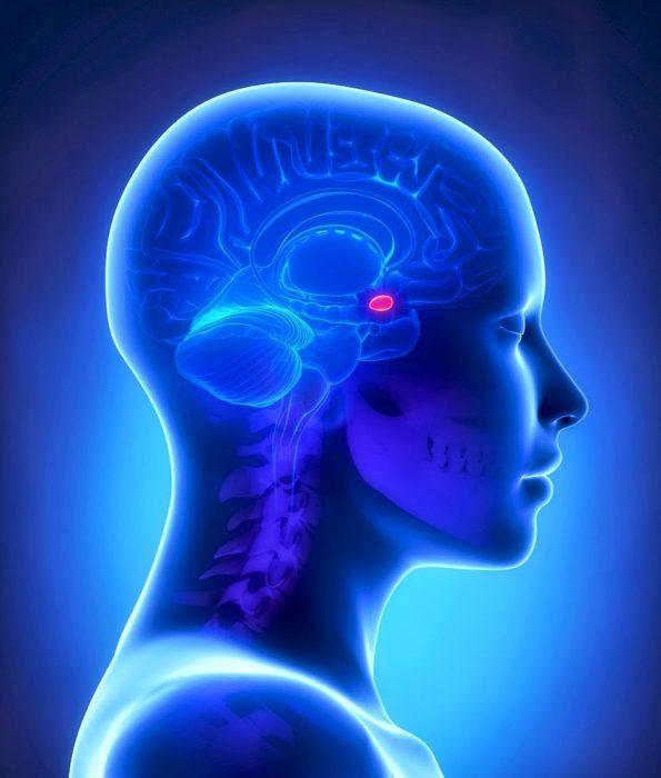 выработка гормона гипофизом