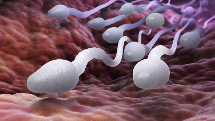 агрегация сперматозоидов