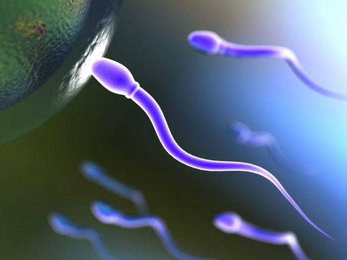 активность и жизнеспособность спермиев