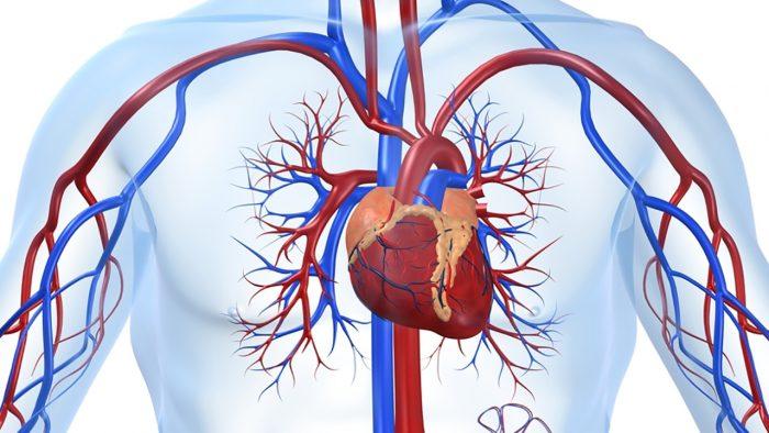 болезни кровеносной системы